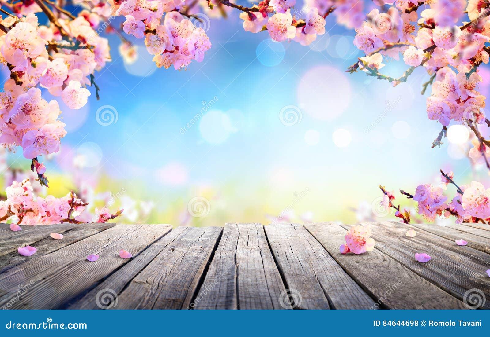 De lentevertoning - Roze Bloesems