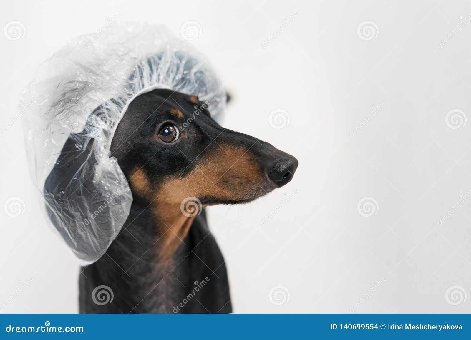 De leuke hondtekkel, zwarte en tan, neemt een bad met zeepschuim, dat het baden GLB dicht omhoog draagt