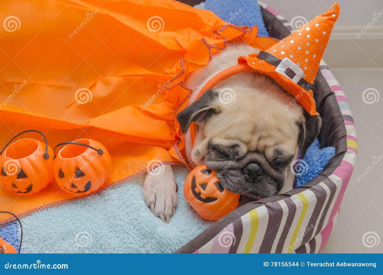 De leuke pug hond met kostuum van de gelukkige Halloween-rust van de dagslaap bepaalt op bed