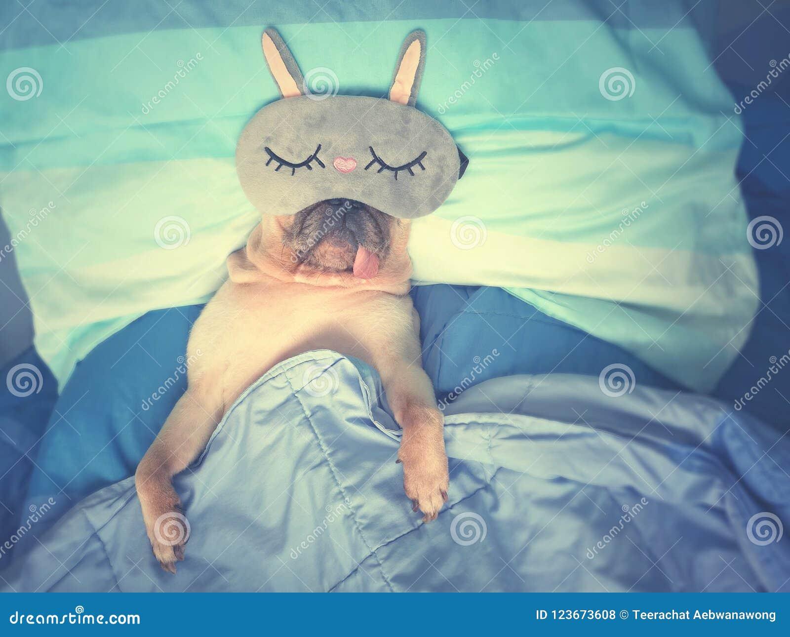 De leuke pug rust van de hondslaap met grappig masker in het bed, omslag met bl
