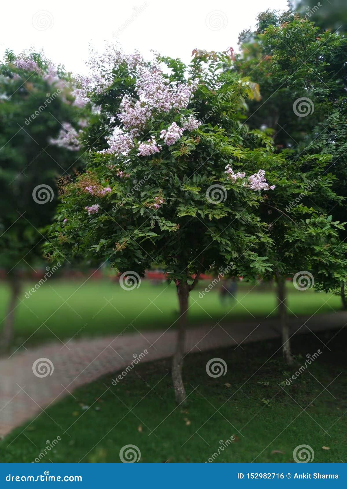 De liefde is een boom enkel zoals vriendschap