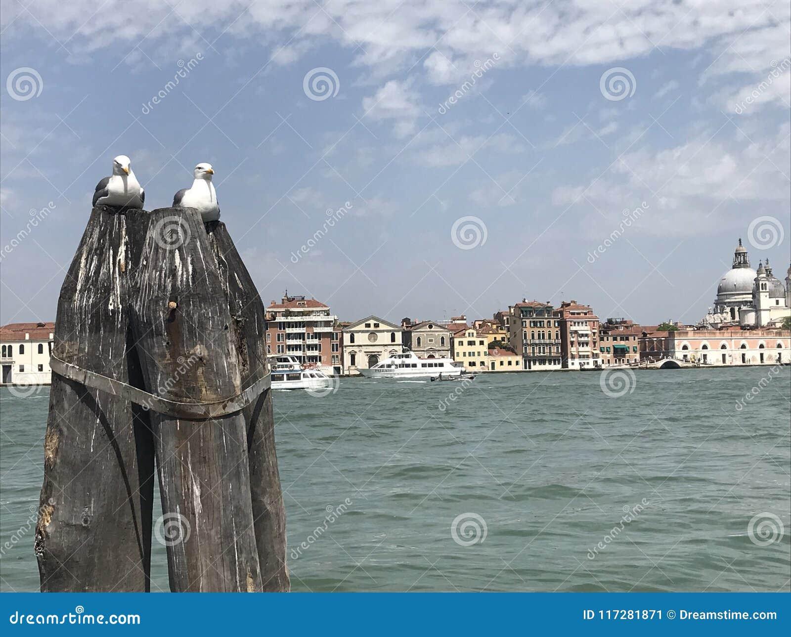 De liefdezeemeeuwen van Venetië