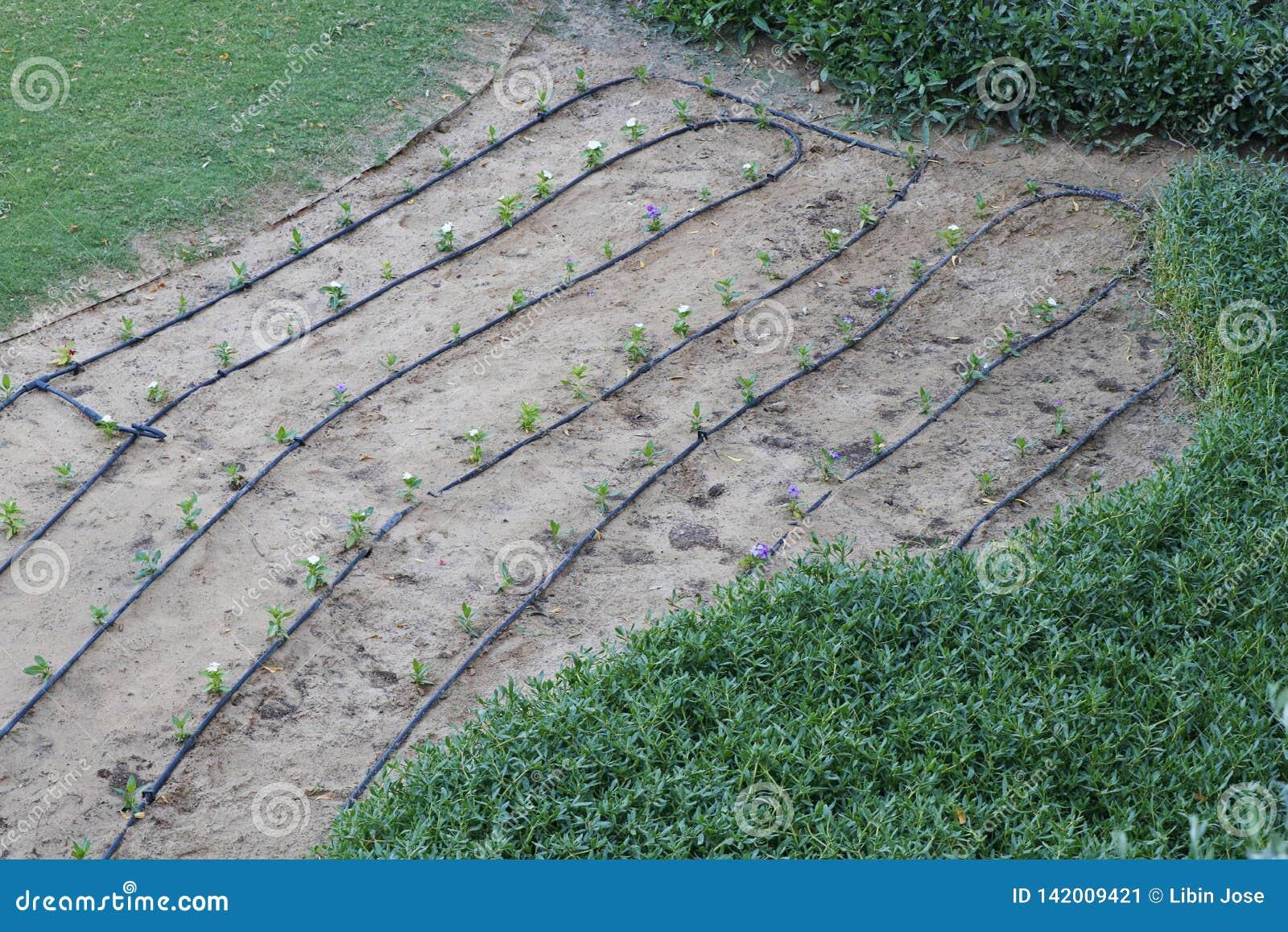 De lijn van de waterslang voor tuin en gebied