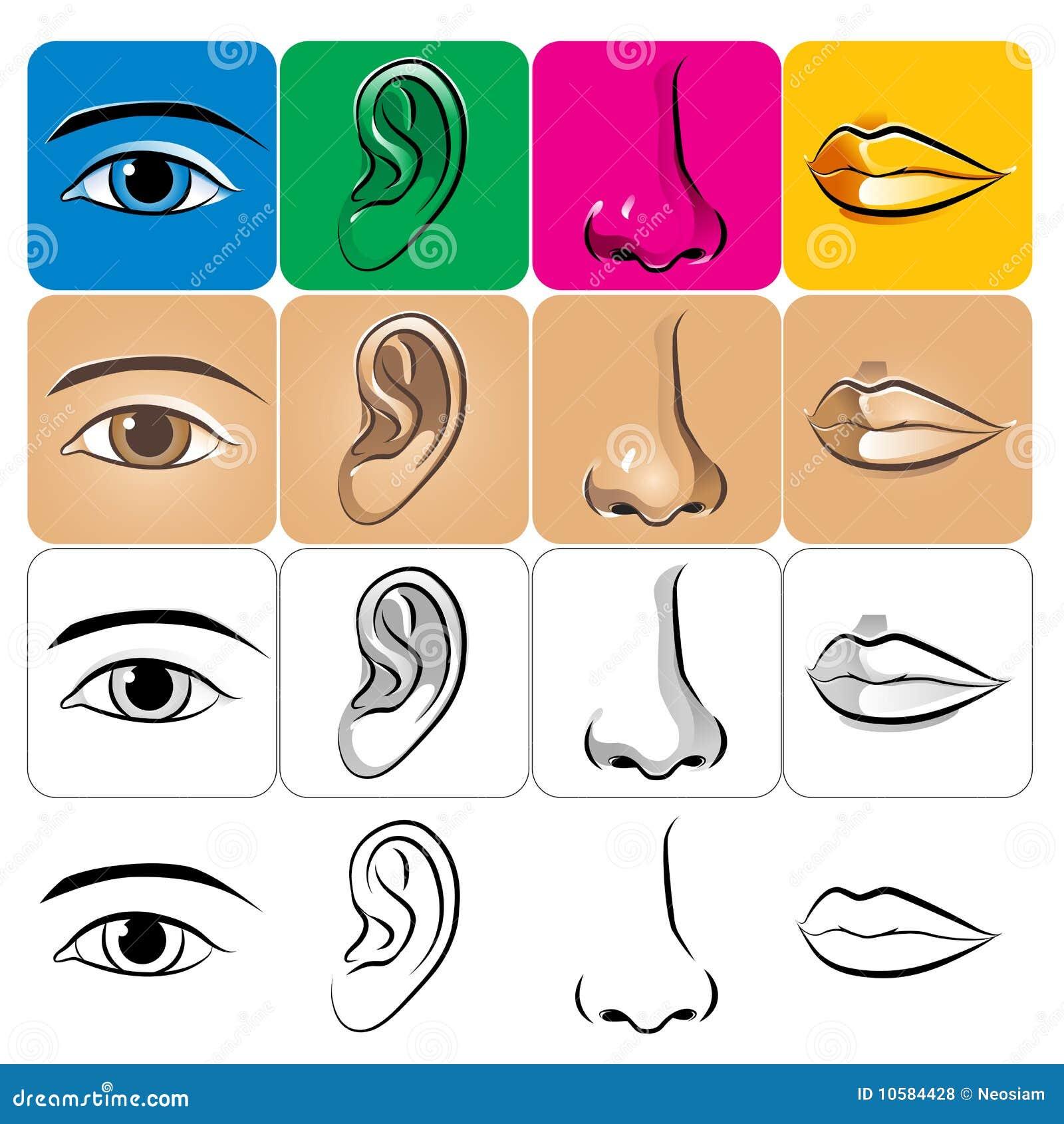 de lip de neus het oor het oog royalty vrije