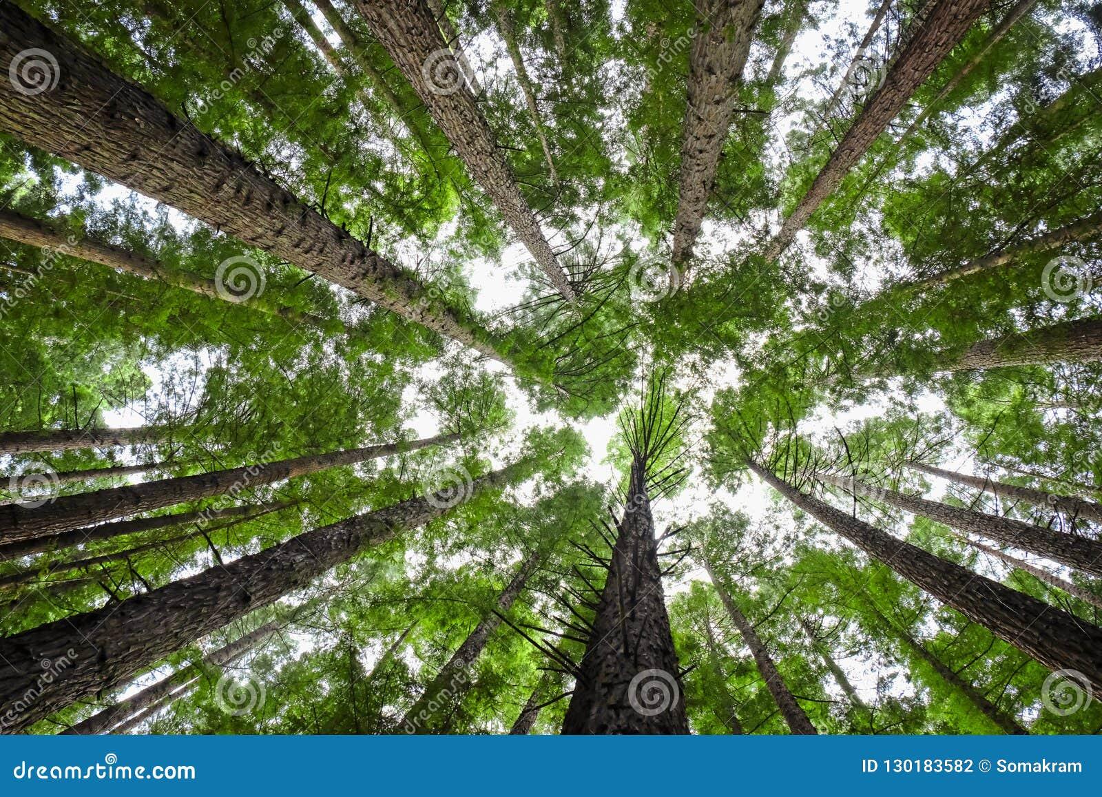 De Luifel van de boom