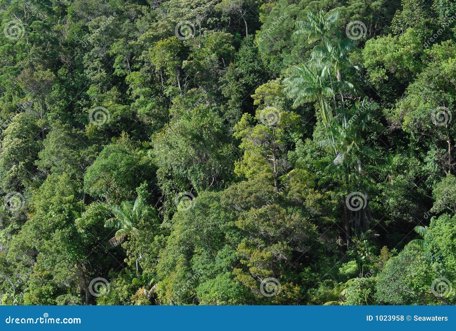 De luifel van de wildernis