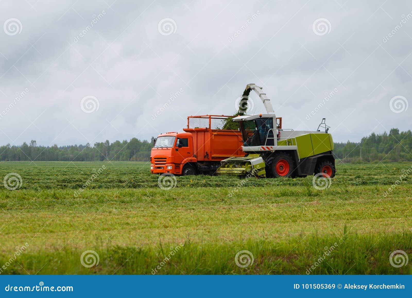 De maaimachine verzamelt droog gras
