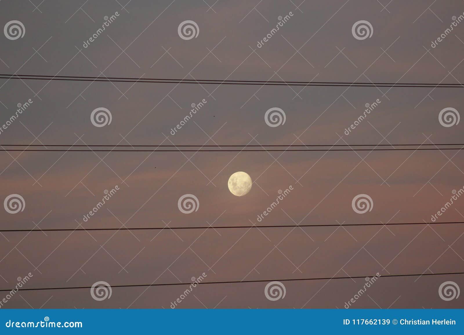 De maan ` s van Argentijnen en dradenvlag