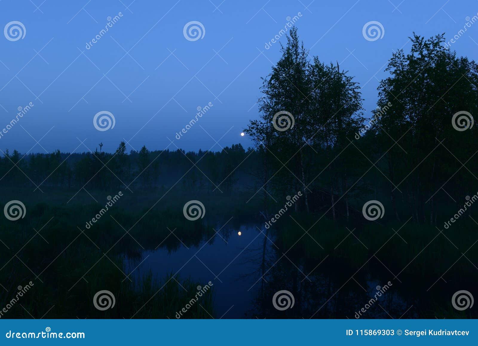 De maan van de de zomernacht in de blauwe hemel over de bosmaan overdacht de oppervlakte van het bosrivierwater