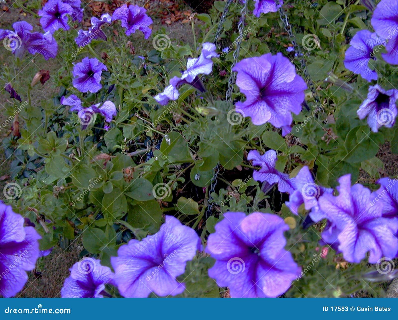 De macht van de bloem