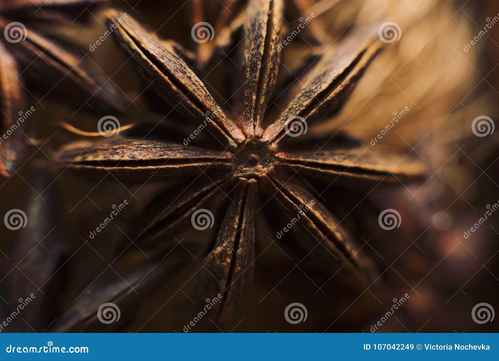 De macro van de anijsplantster Voedselachtergrond en texturen Aromatisch ingrediënt