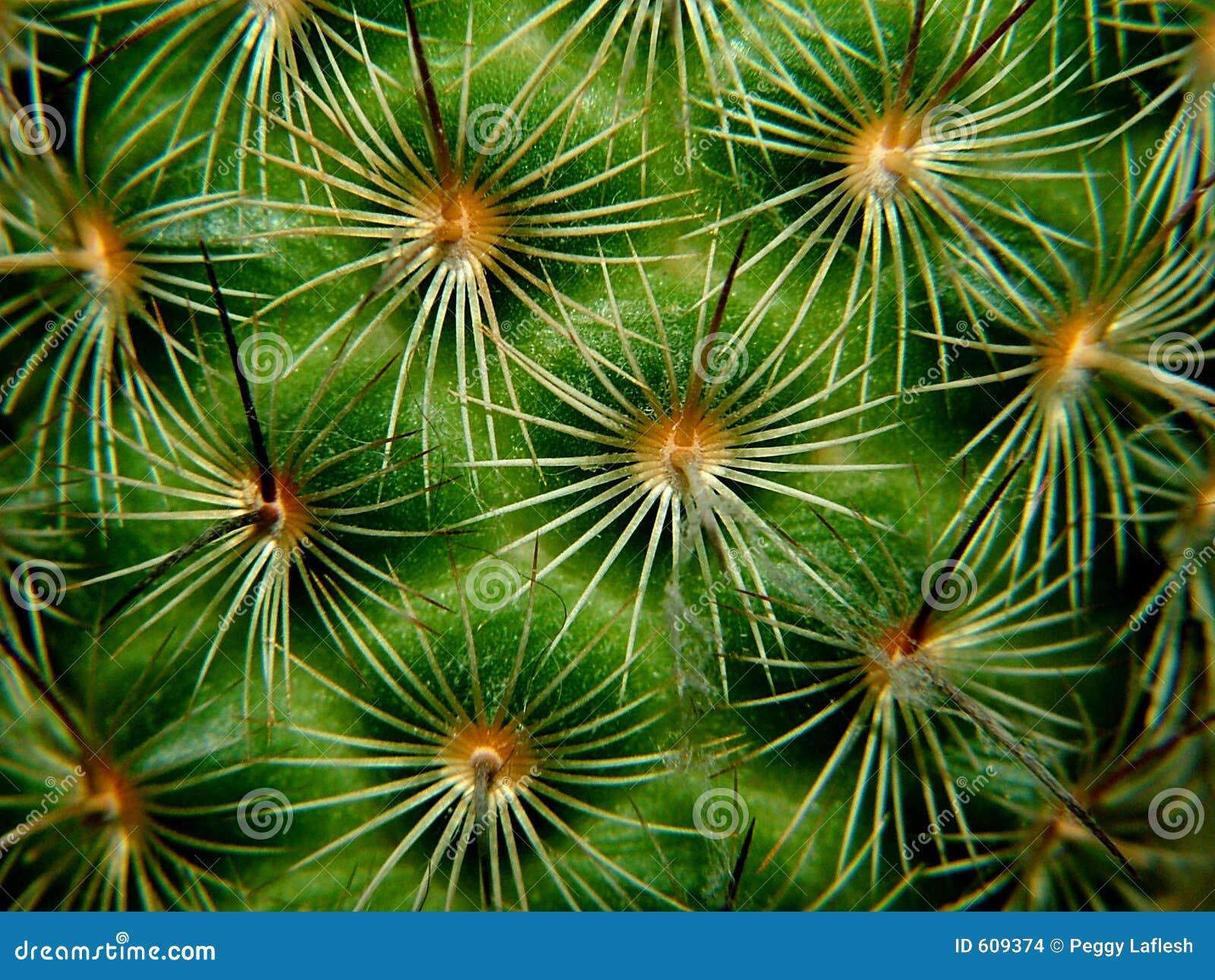 De macro van de cactus