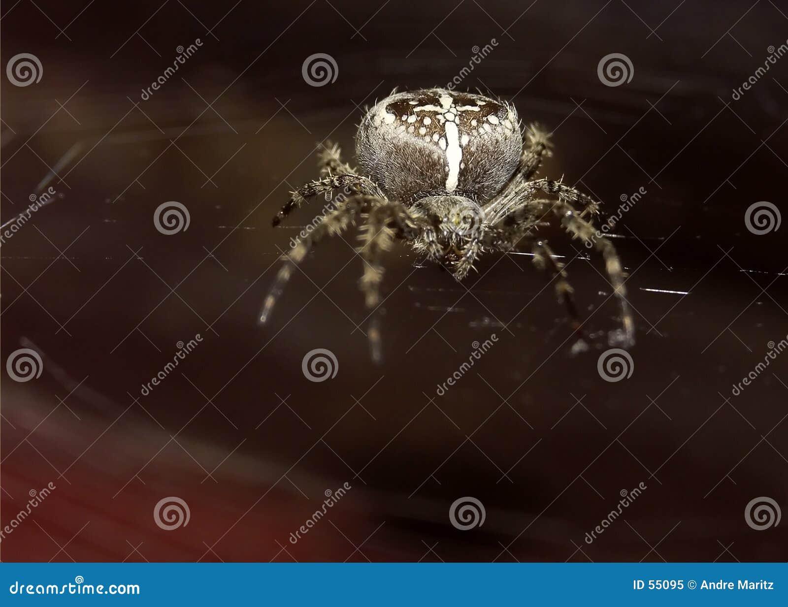De macro van de spin