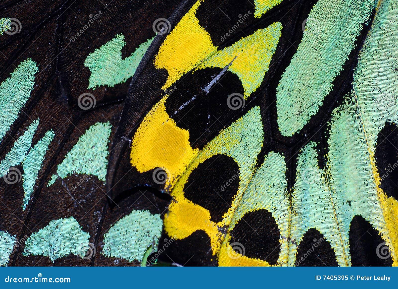 De Macro van de Vleugel van de vlinder