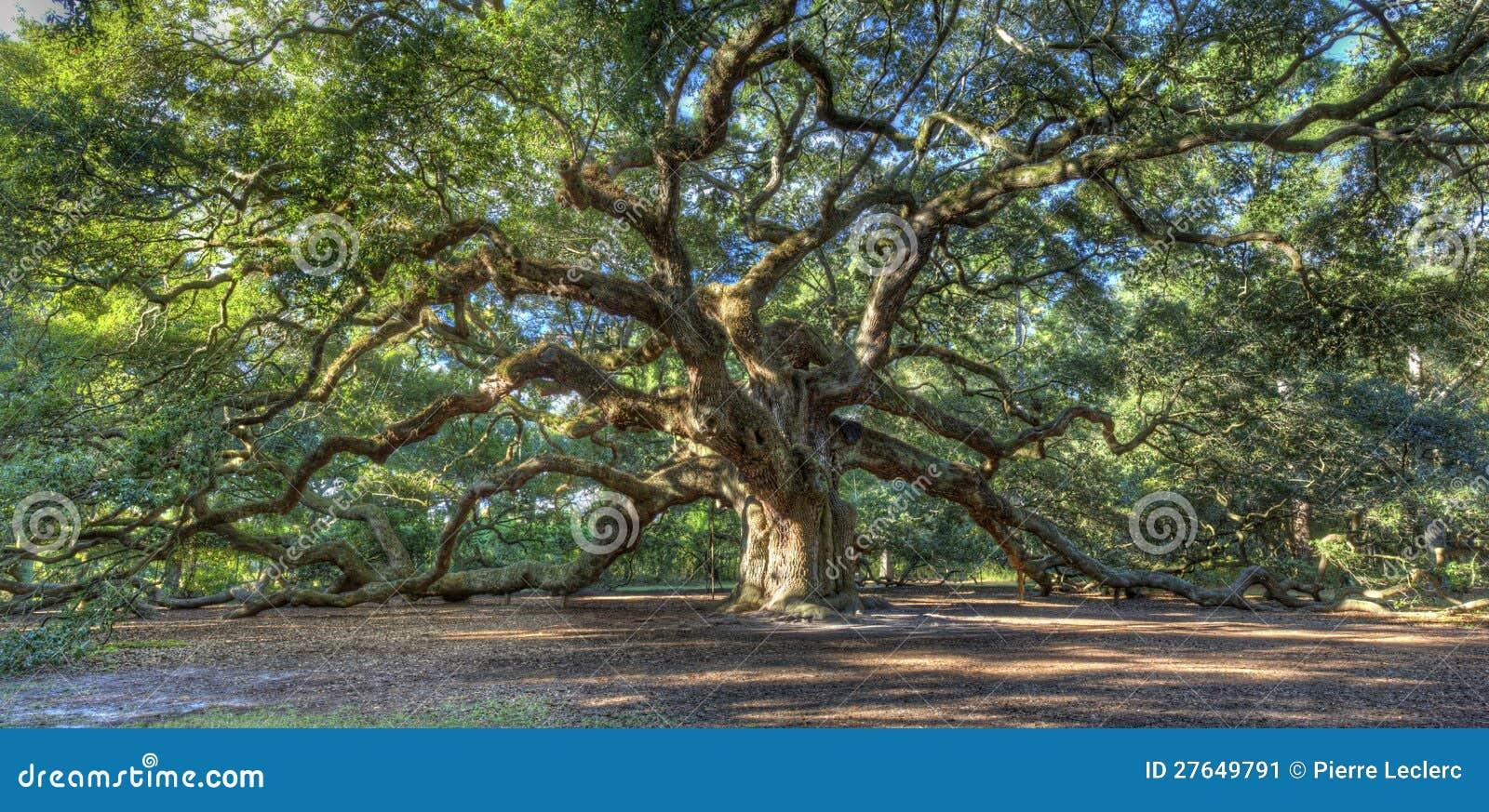 De magische Eiken boom van de Engel, Sc van Charleston