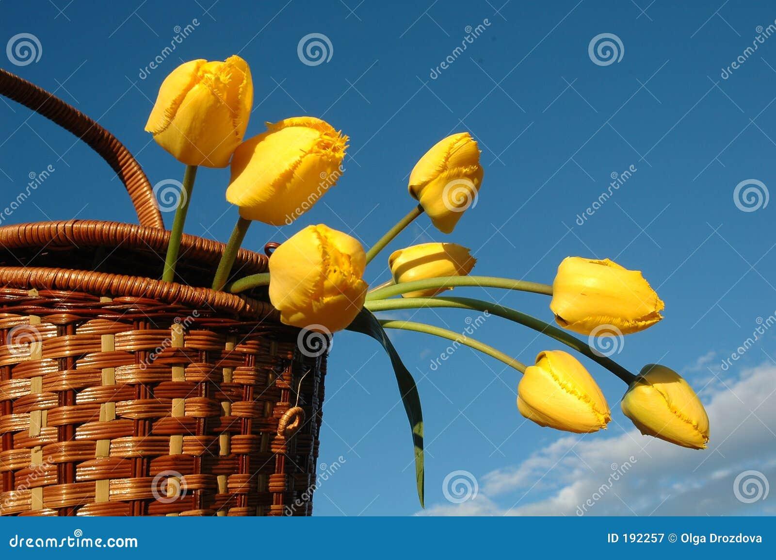 De mand met gele tulpen.