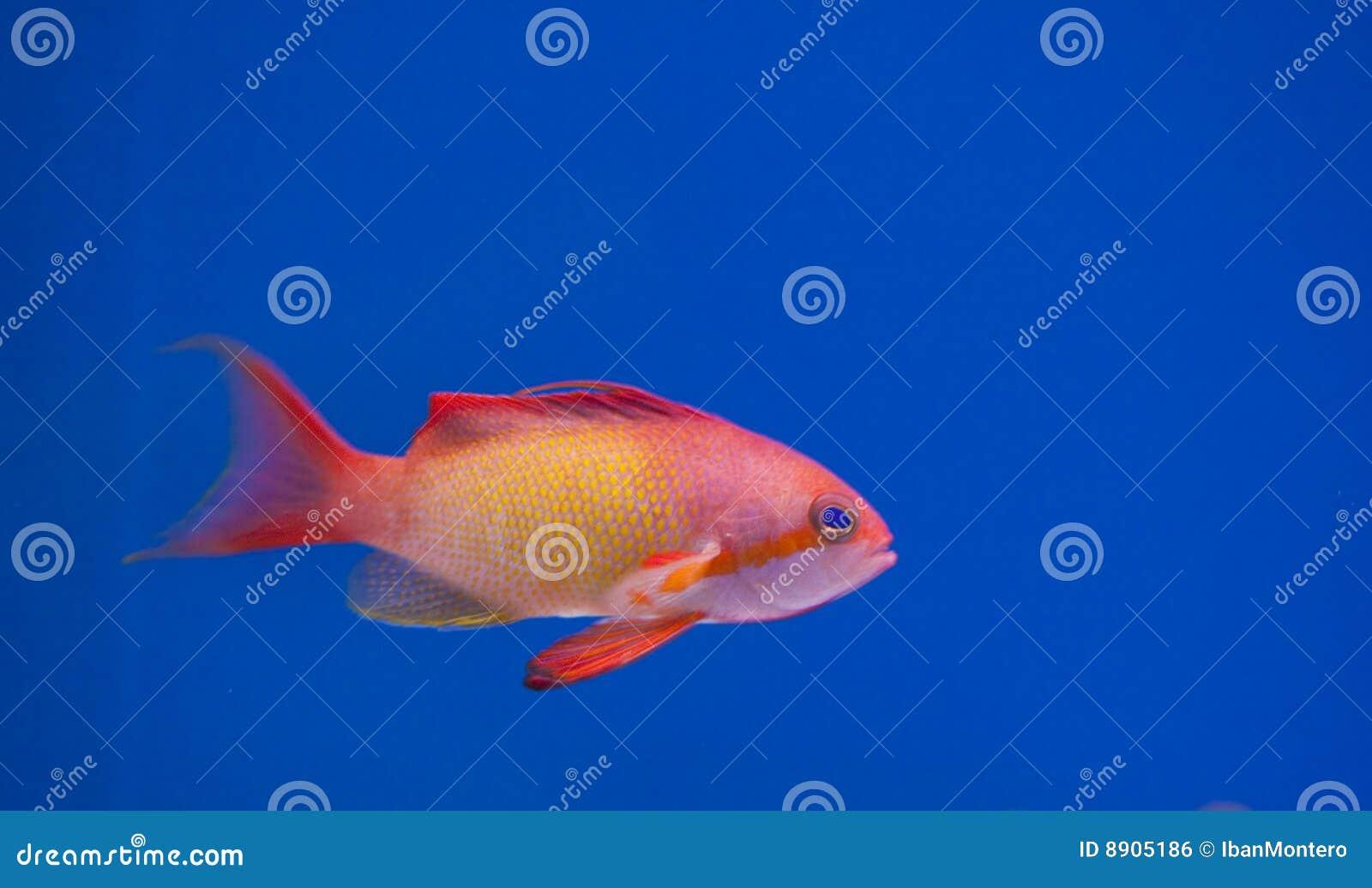 De mariene tank van aquariumvissen