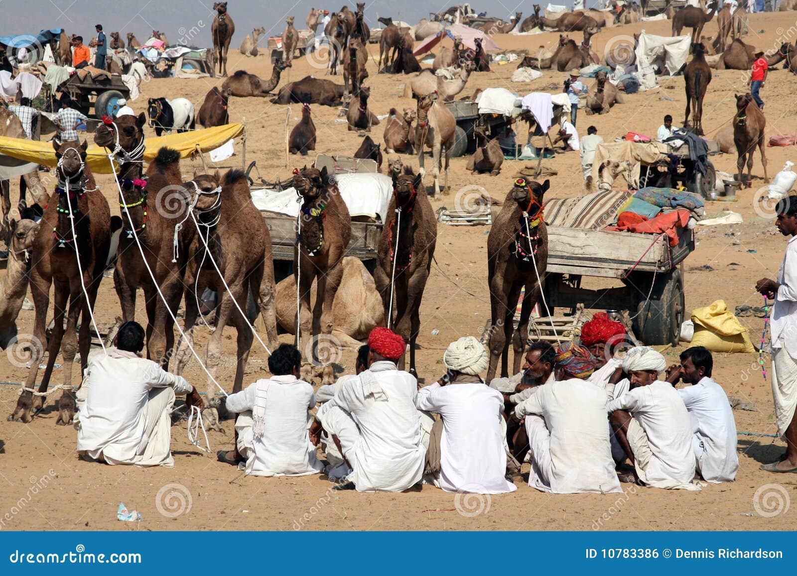 De markt van de kameel, India