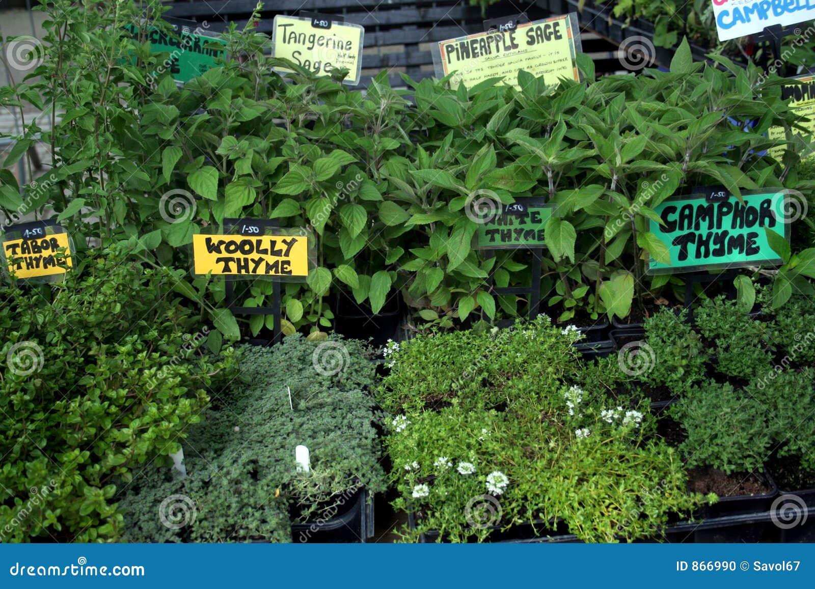 De markt van de tuin verse kruiden stock foto afbeelding 866990 - Foto droge tuin ...