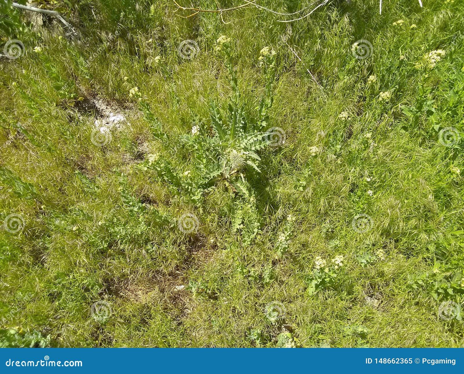 De mauvaise herbe fleur mauvaise pr? loin