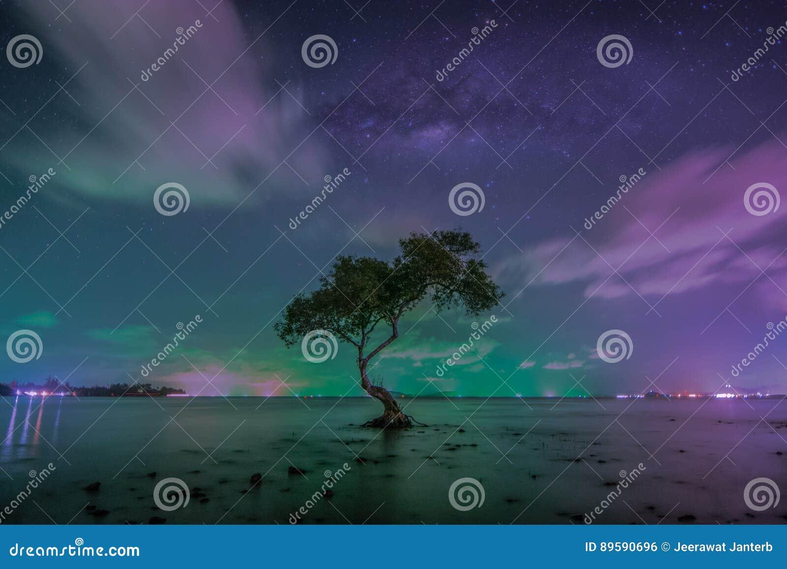 De melkachtige manier over grote boom op strand in tropisch strand met hemel