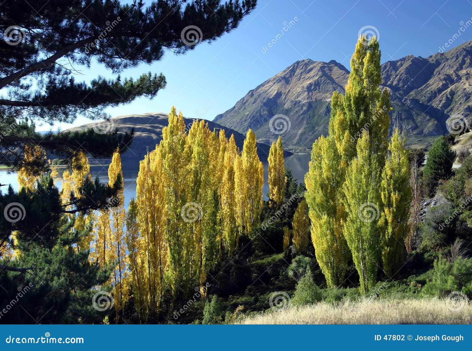 De mening van de berg, Nieuw Zeeland