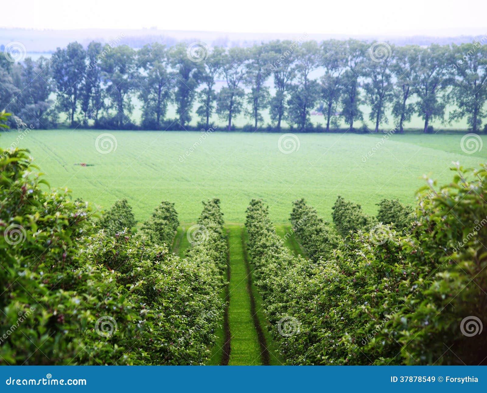 De mening van de de lentewijngaard