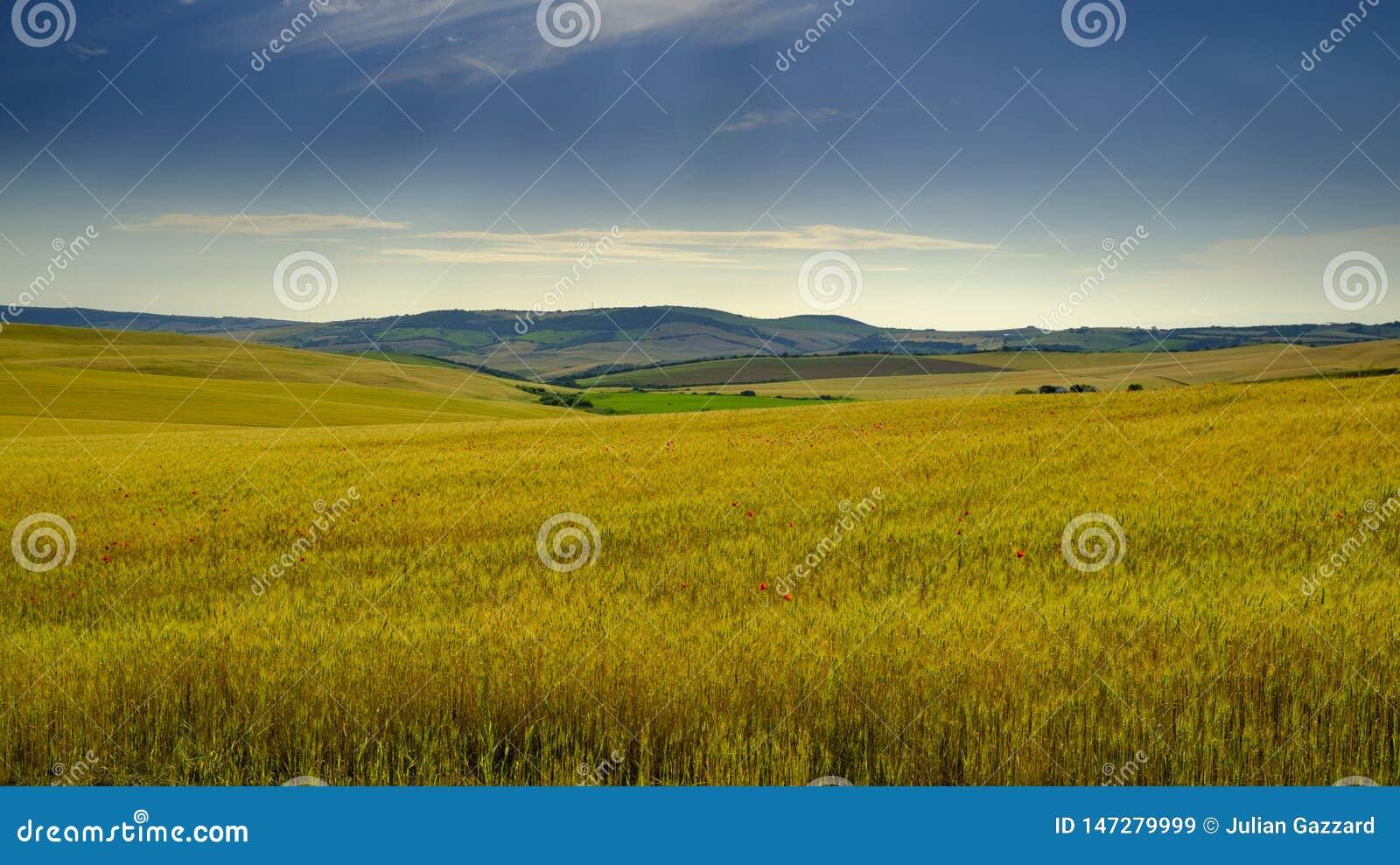 De mening van het Andalucianplatteland in de vroege zomer