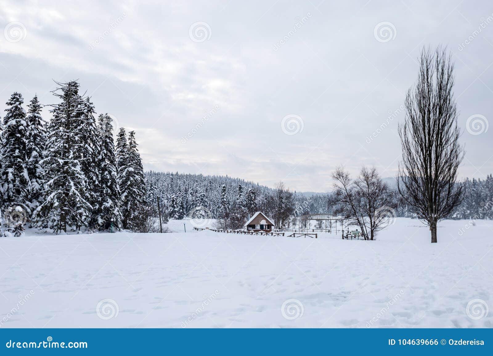 Download De Mening Van Het De Winterlandschap Met Pijnboombos Stock Foto - Afbeelding bestaande uit scène, landelijk: 104639666