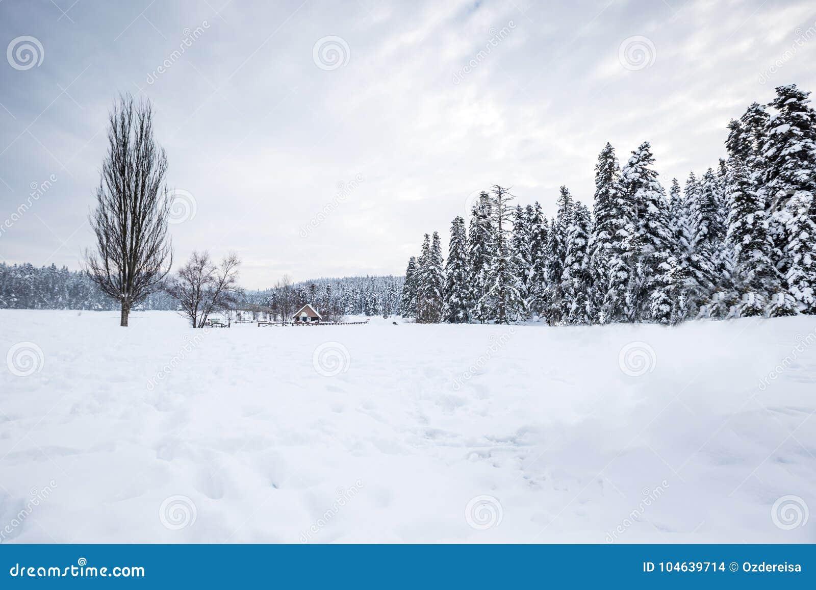Download De Mening Van Het De Winterlandschap Met Pijnboombos Stock Foto - Afbeelding bestaande uit seizoen, nevelig: 104639714