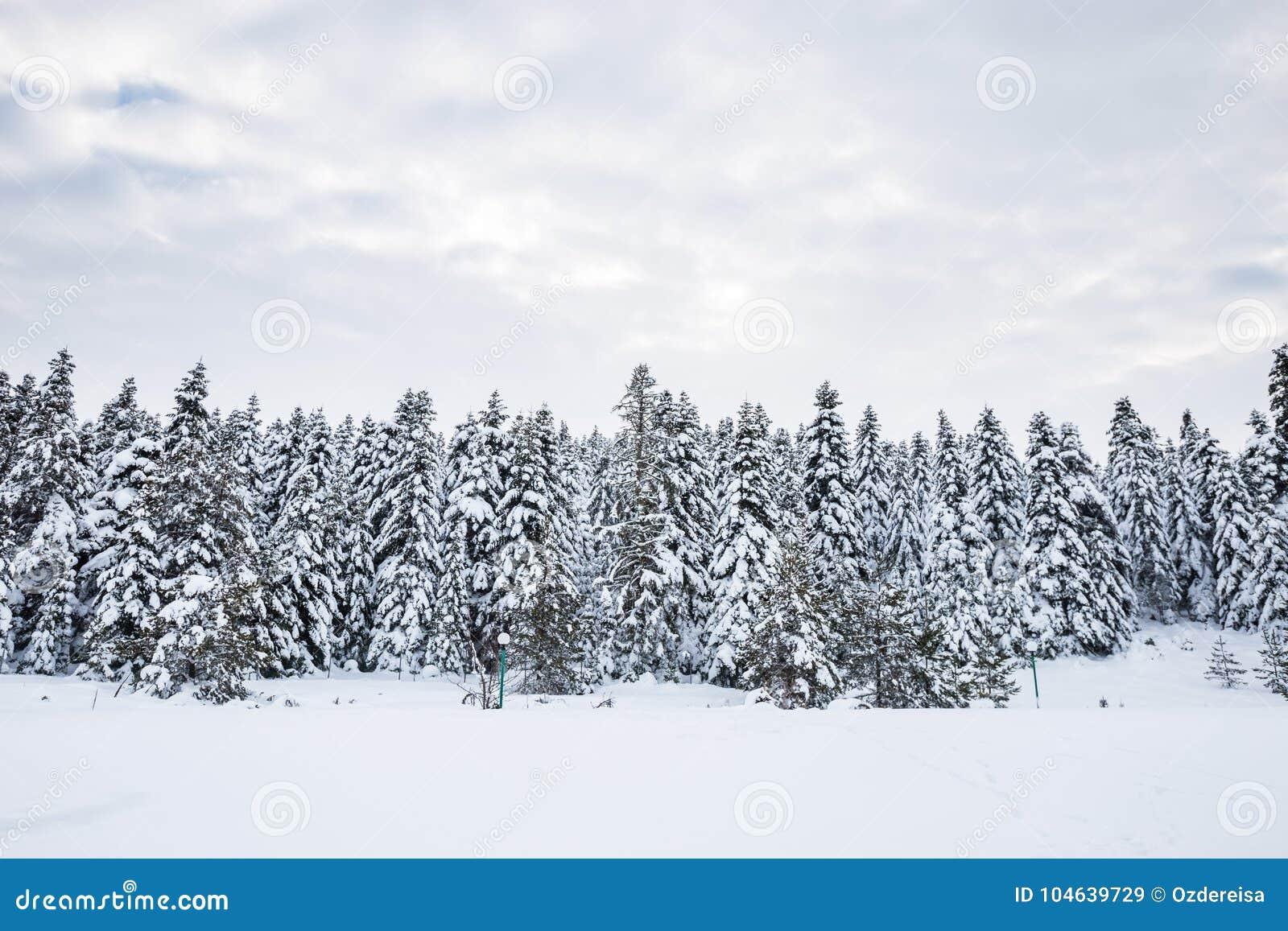 Download De Mening Van Het De Winterlandschap Met Pijnboombos Stock Afbeelding - Afbeelding bestaande uit koel, seizoen: 104639729
