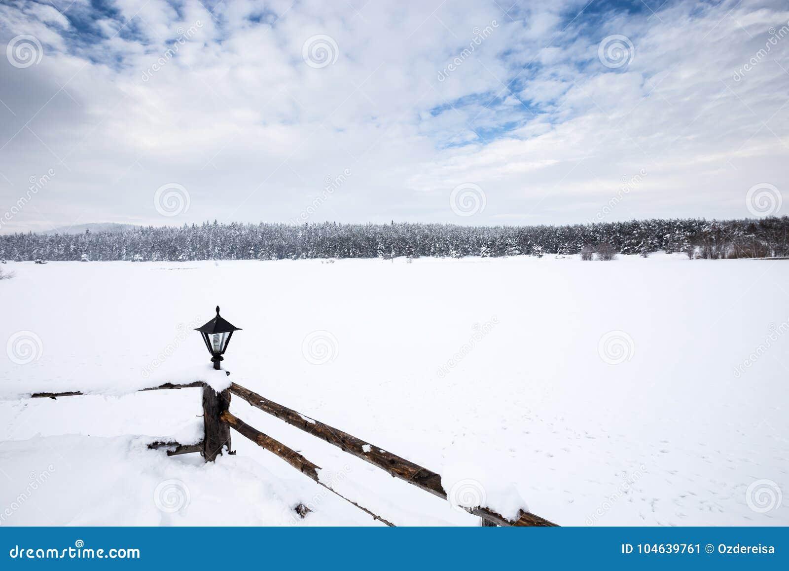 De mening van het de winterlandschap met pijnboombos