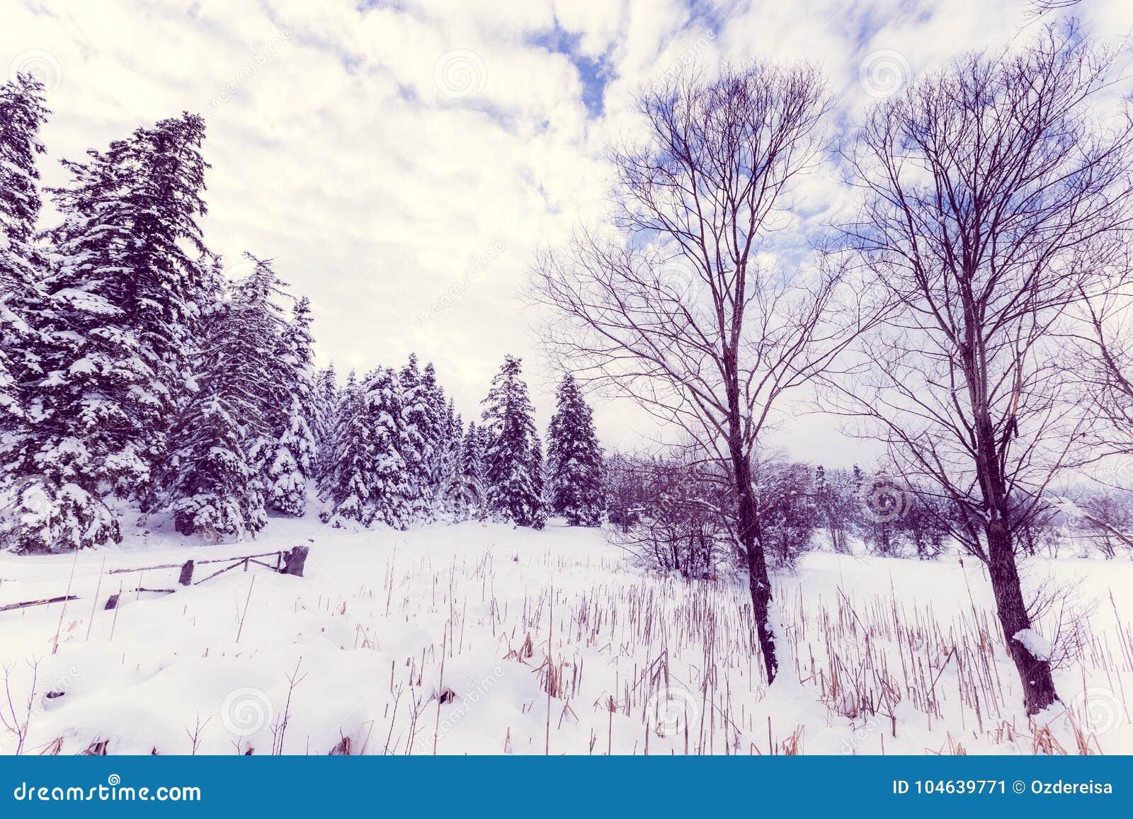 Download De Mening Van Het De Winterlandschap Met Pijnboombos Stock Afbeelding - Afbeelding bestaande uit meer, koude: 104639771