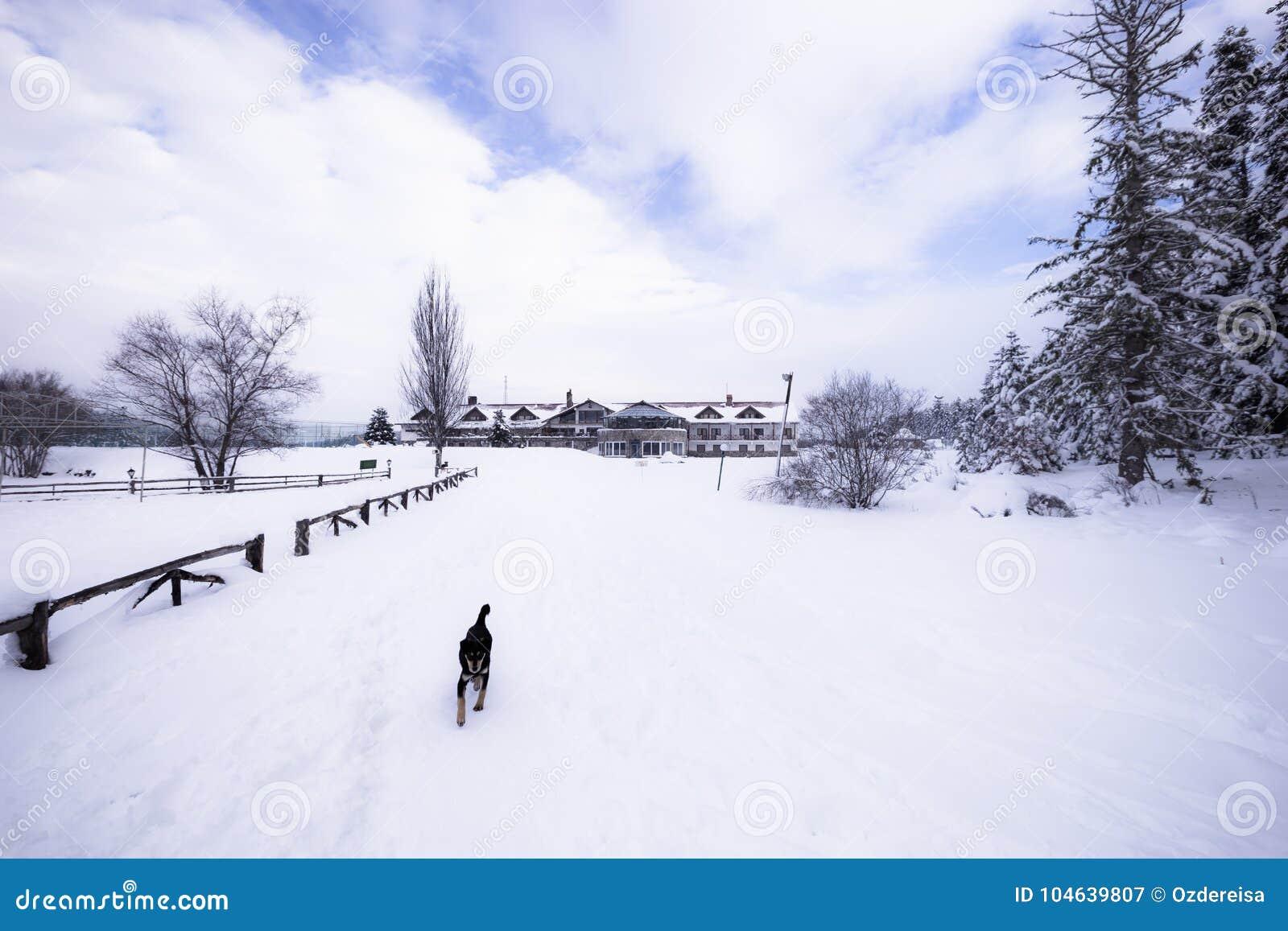 Download De Mening Van Het De Winterlandschap Met Pijnboombos Stock Afbeelding - Afbeelding bestaande uit vorst, meer: 104639807