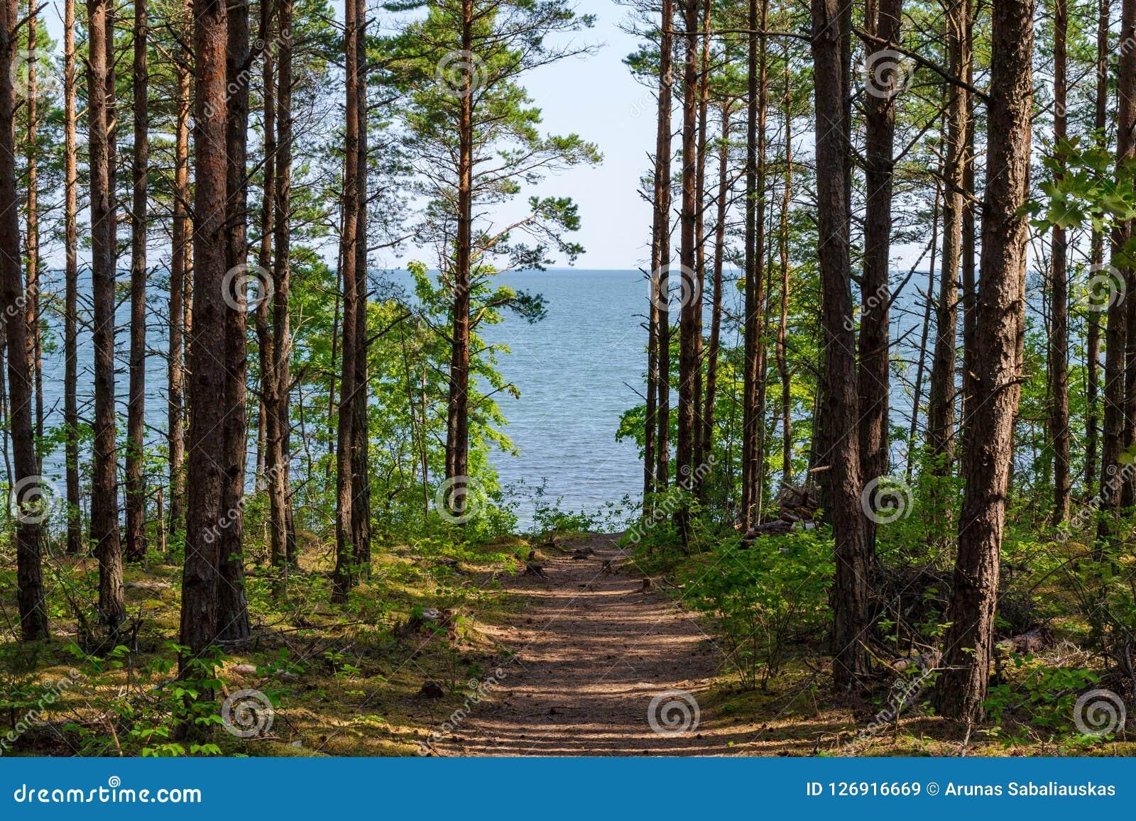 De mening van mooi ziet landschap in Saaremaa, Estland
