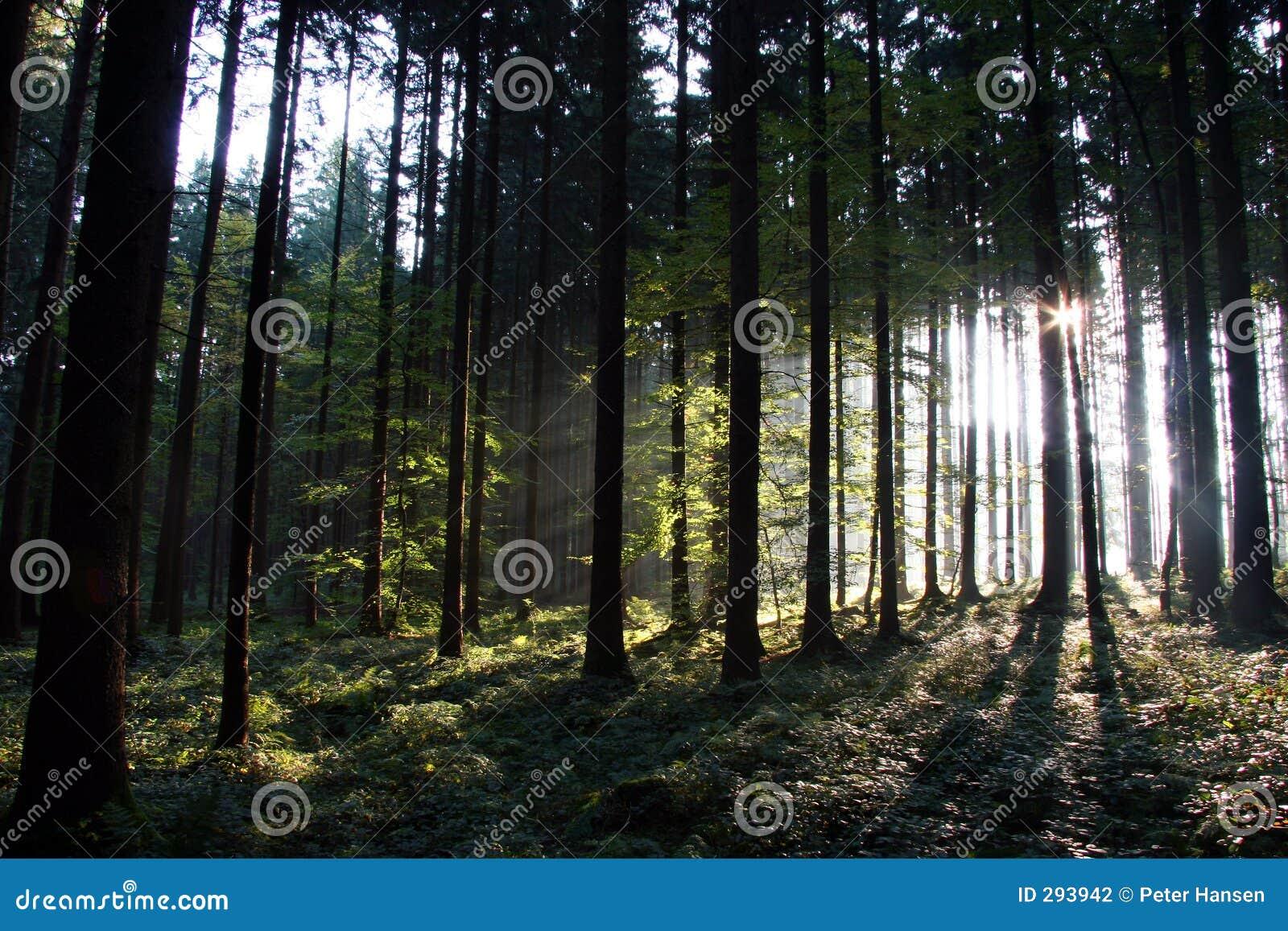 De mening van Panaramic van zonnig bos