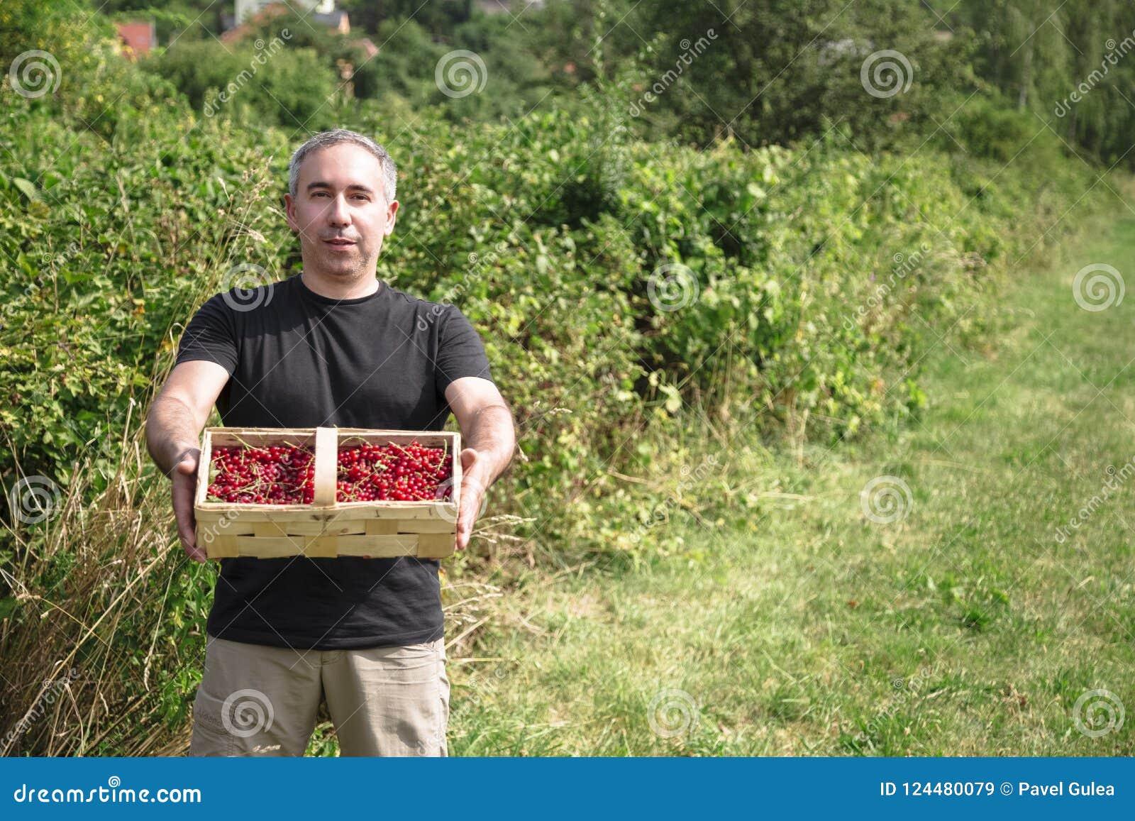 De mens houdt rode aalbessen in een mand
