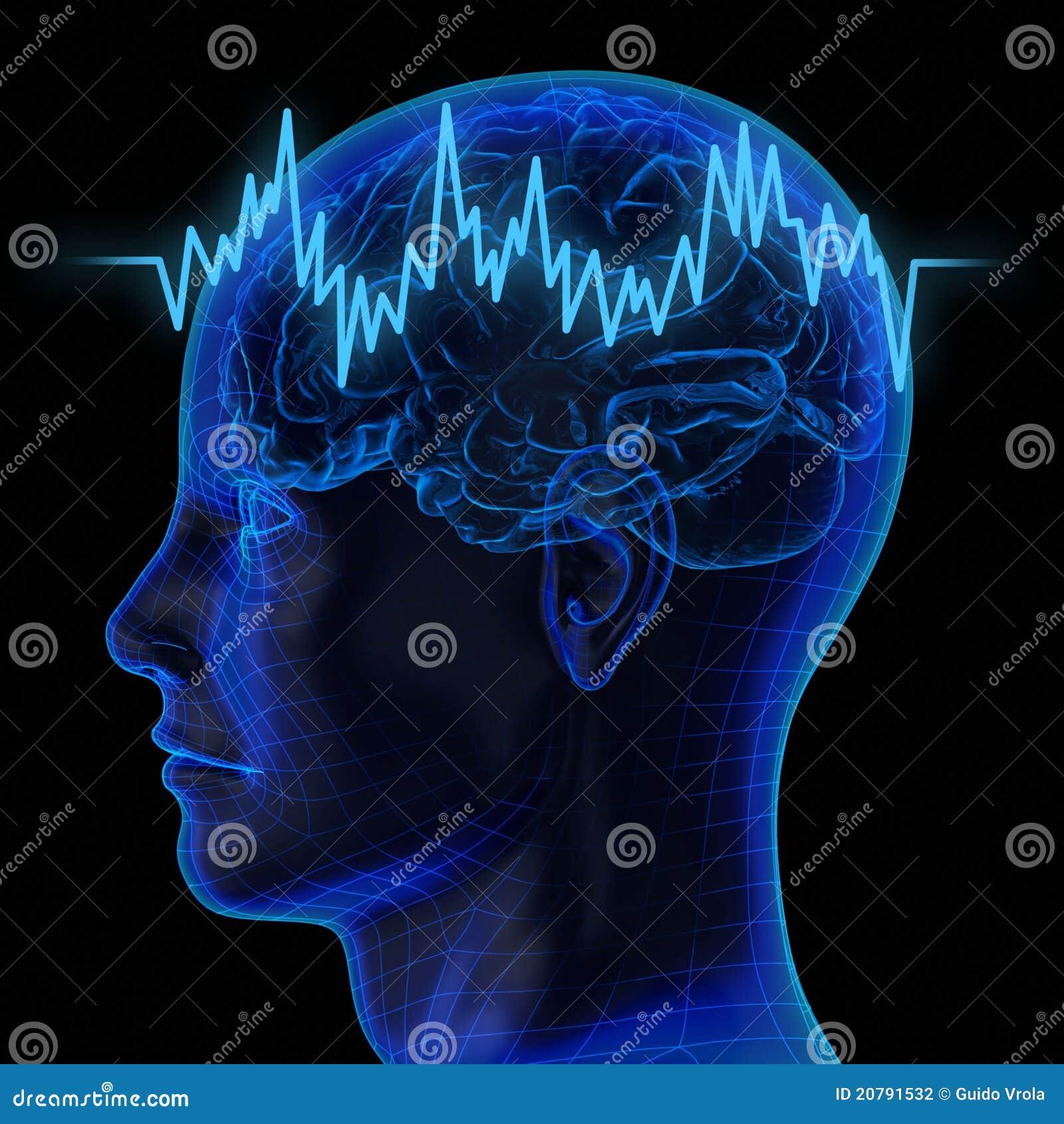 De menselijke hersenen