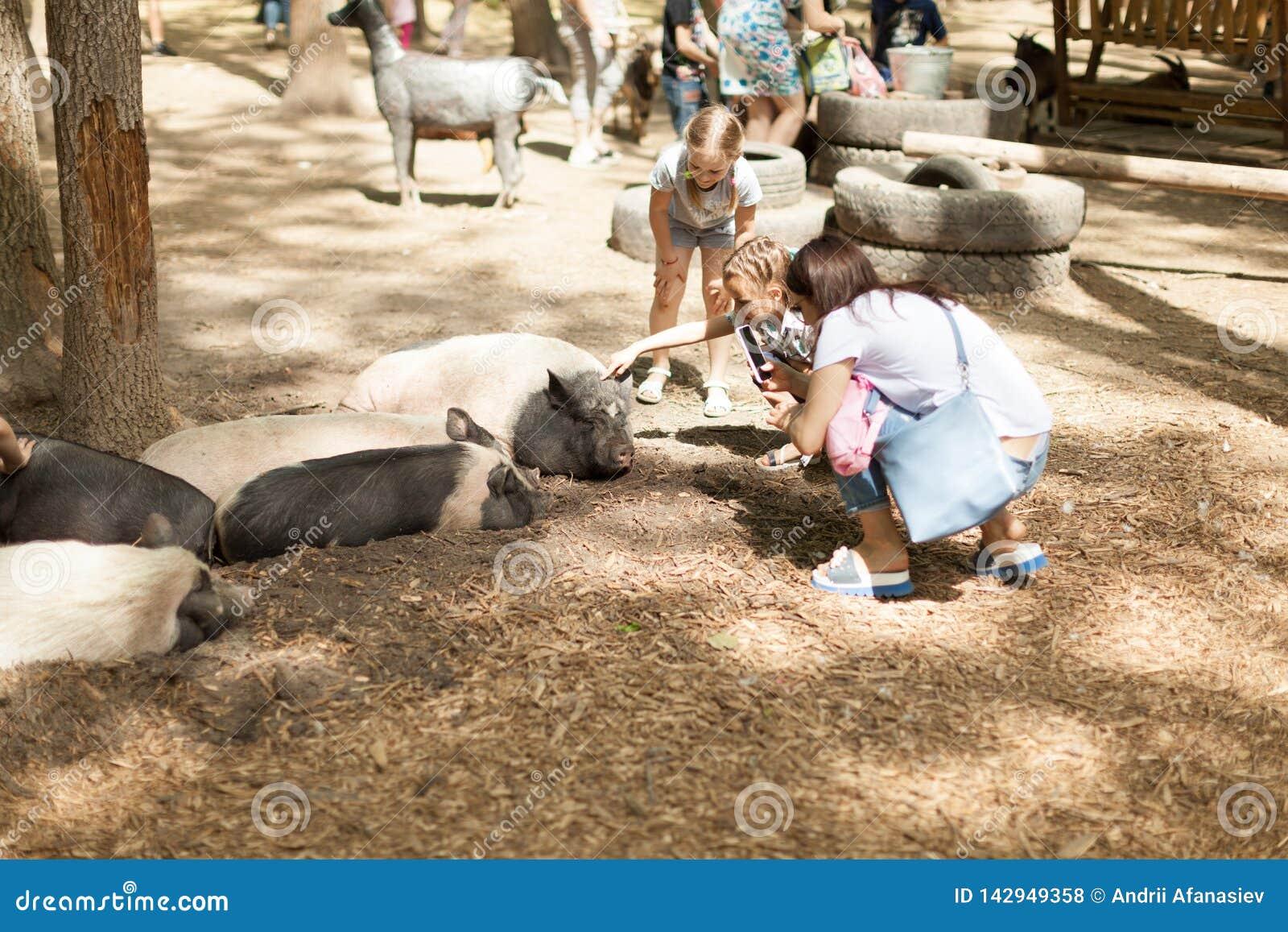 De mensen fotograferen grote varkensdieren in een contactdierentuin op een mobiel Park Kharkov de Oekraïne 2018 van telefoonfeldm