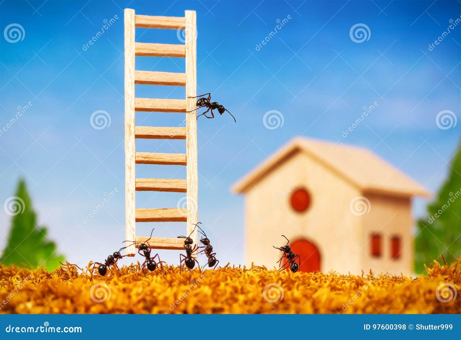 De mieren bouwen een huis met ladder