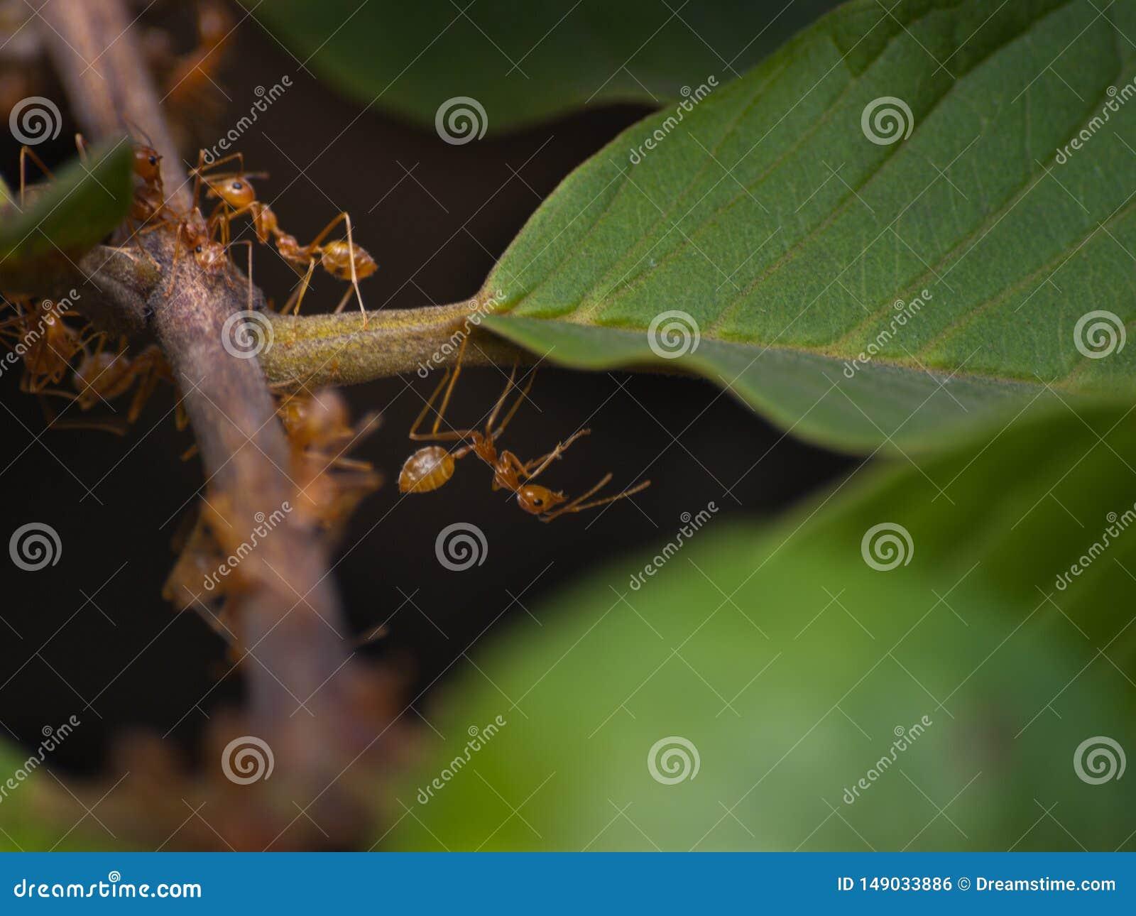 De mieren van de Dierenrijkarbeider