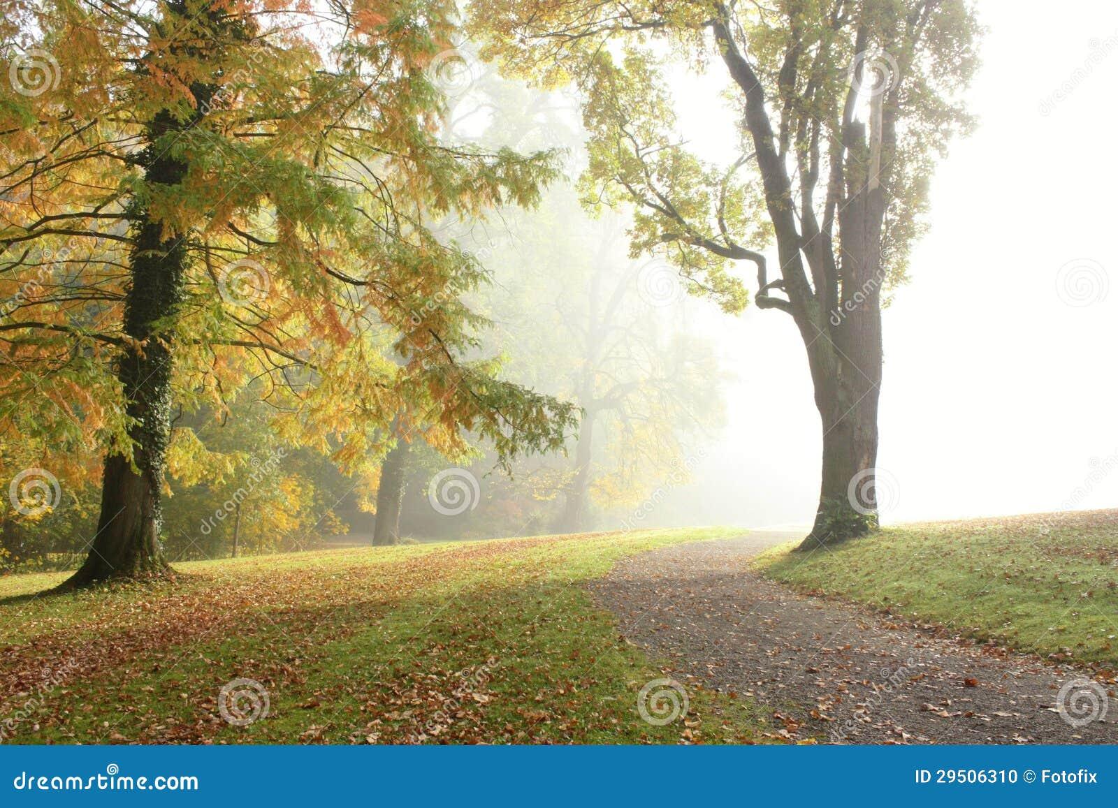 De mist van de ochtend in de herfstpark
