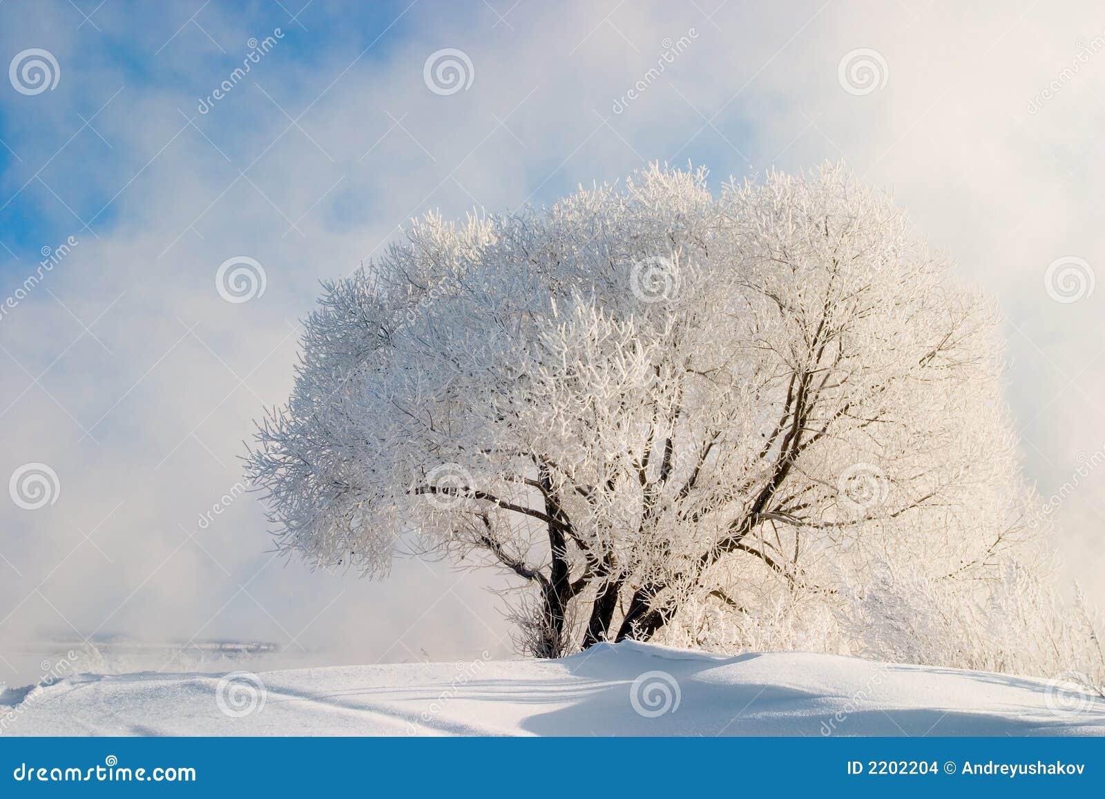 De mist van de winter