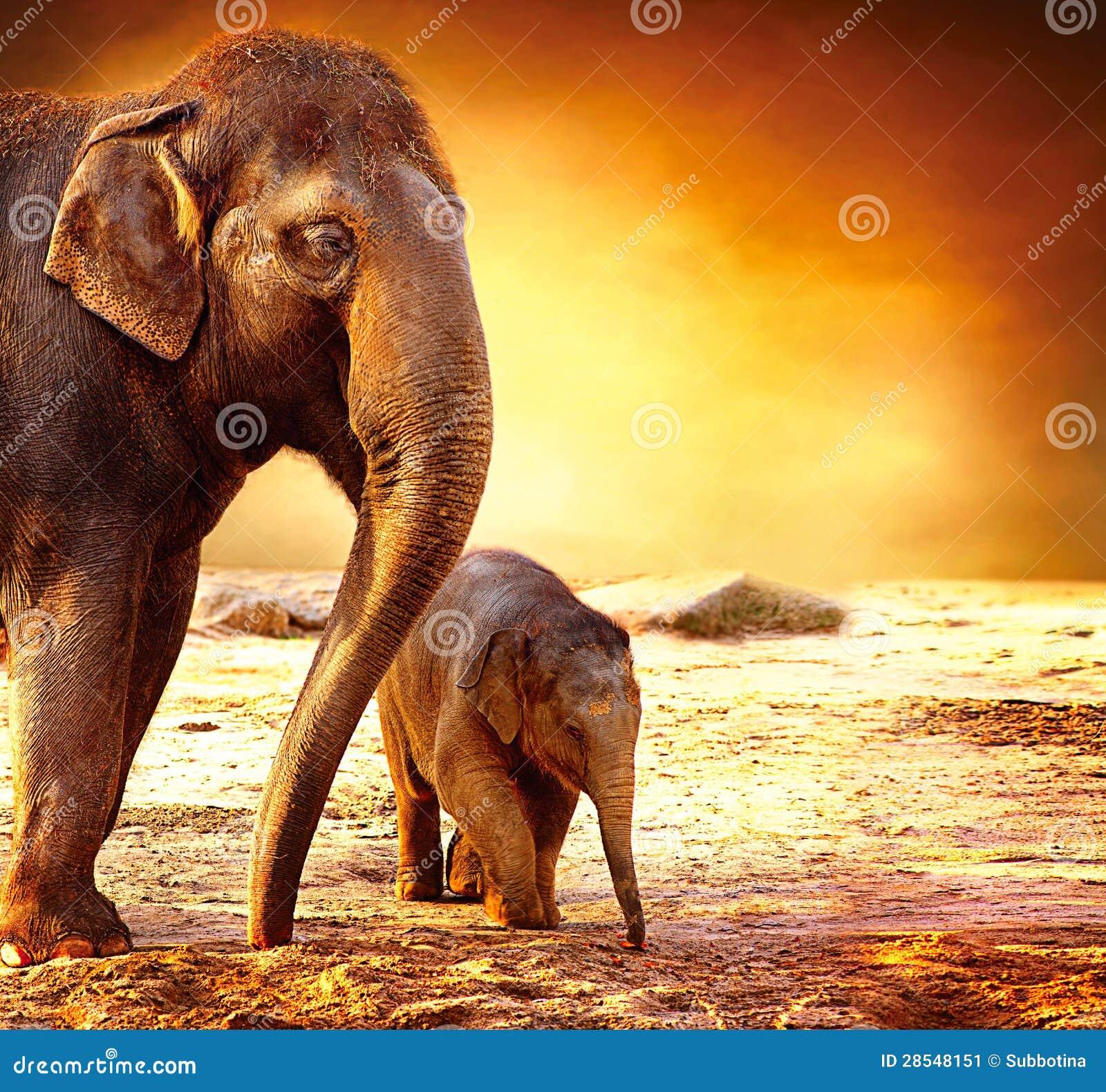 De Moeder van de olifant met Baby