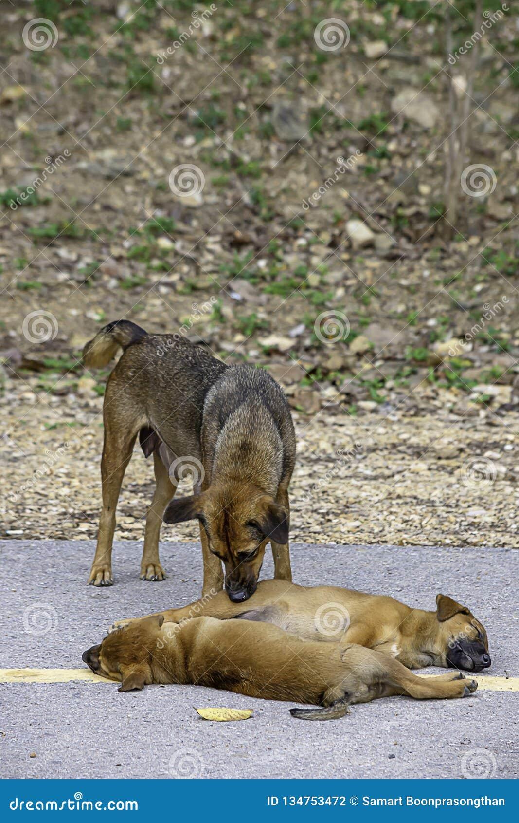 De moederhond maakt het puppy schoon liggend op de weg