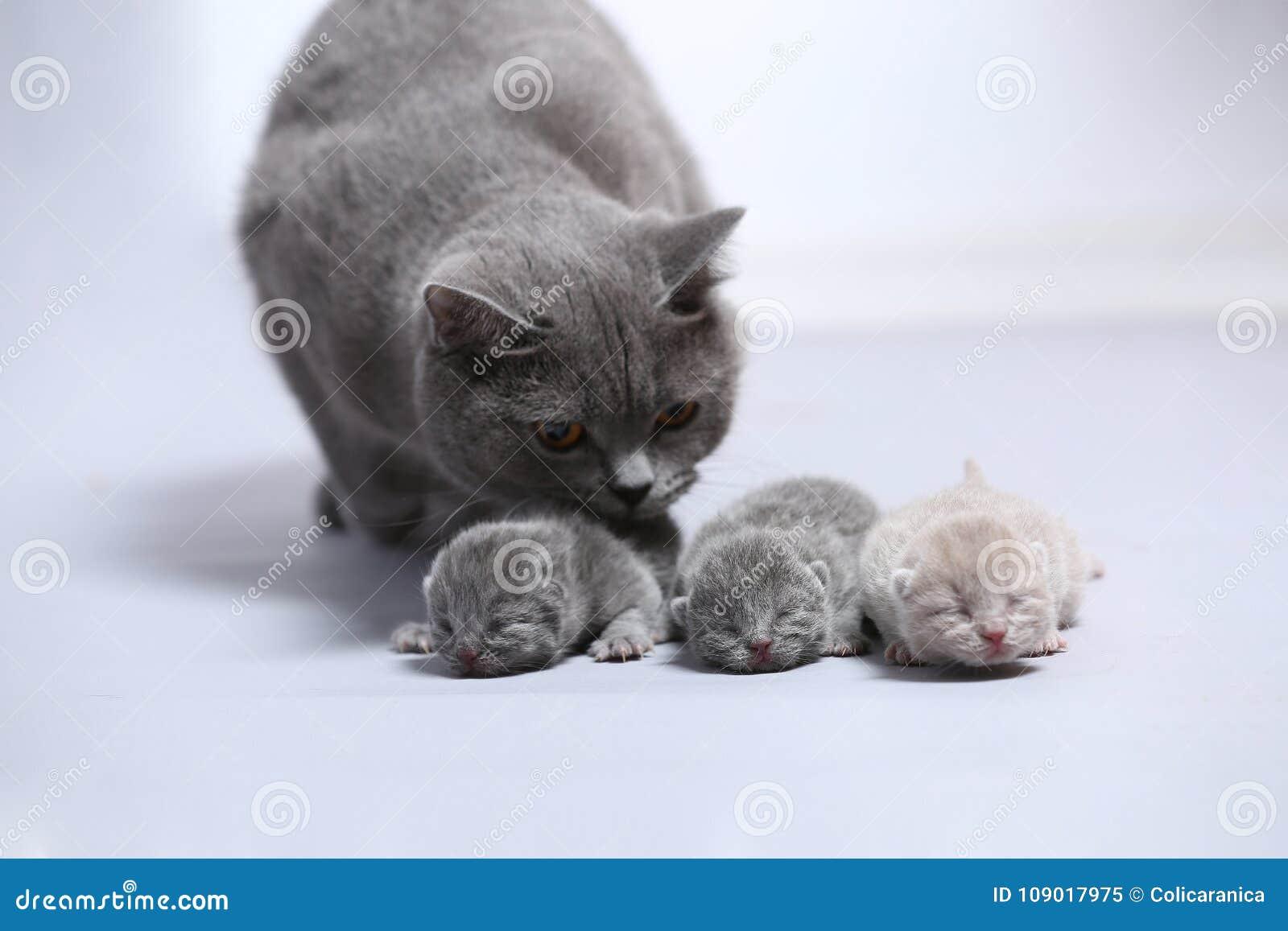 De moederkat behandelt haar onlangs geboren katjes