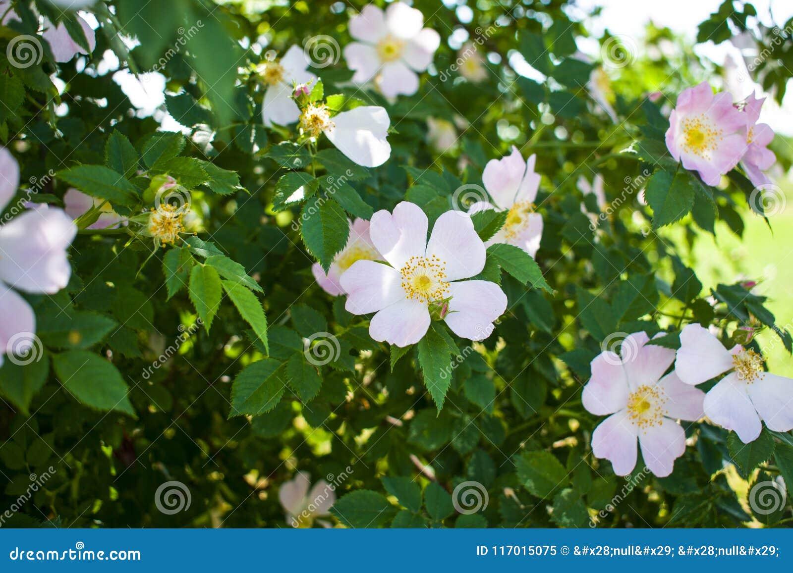 De mooie bloem die nam op een achtergrond van groene bladeren toe bloeien