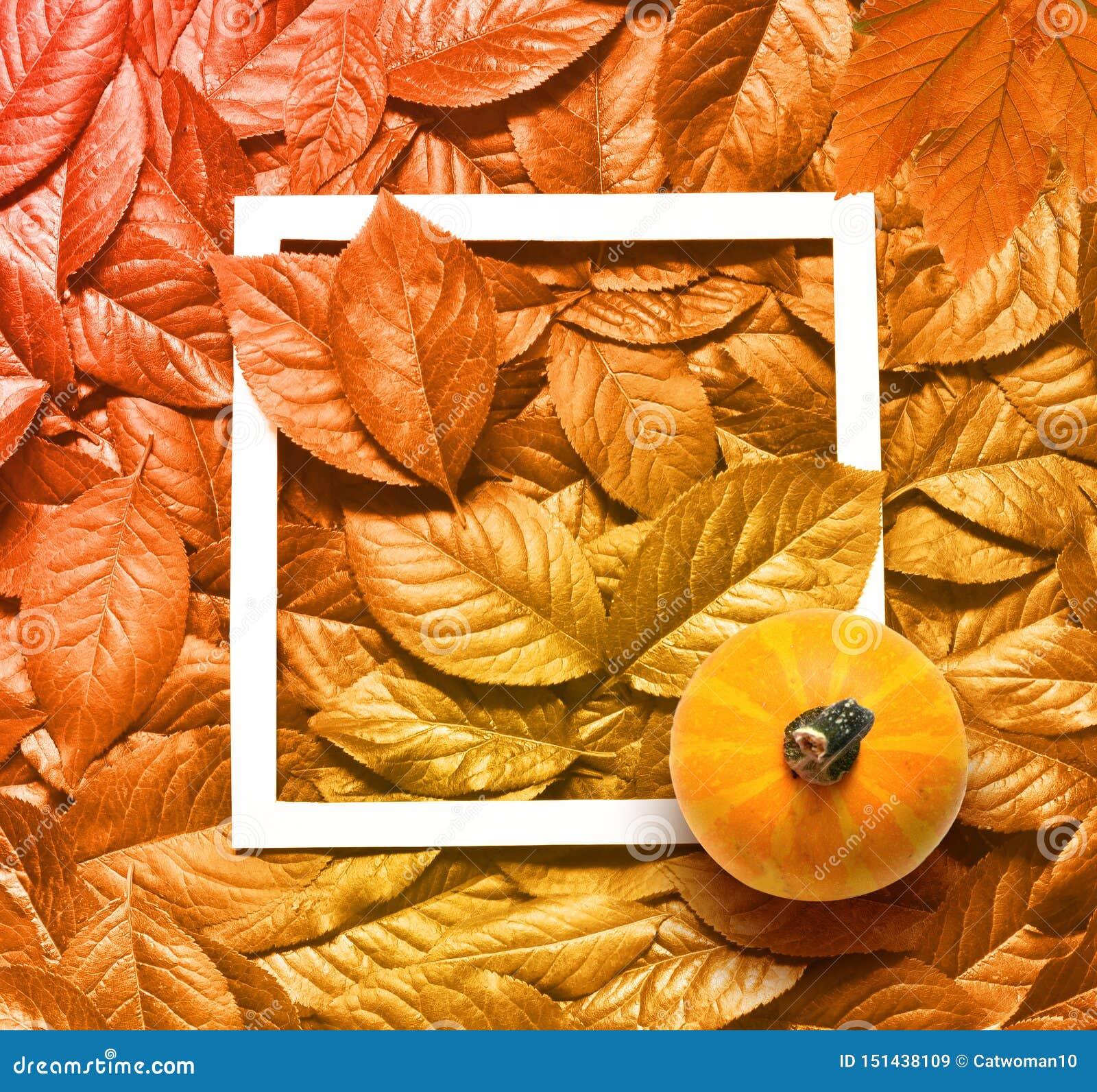 De mooie gele achtergrond en het kader van de herfstbladeren met pompoen