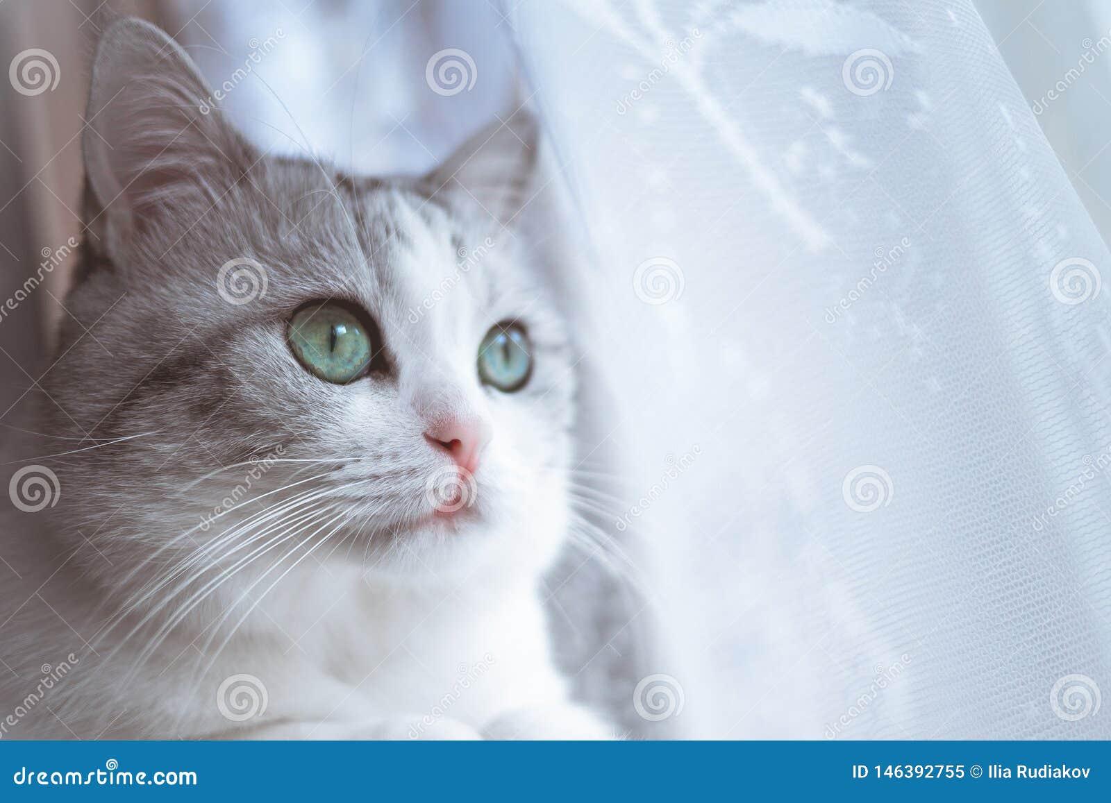 De mooie grijze gestreepte kat eet droge voedsel hoogste mening