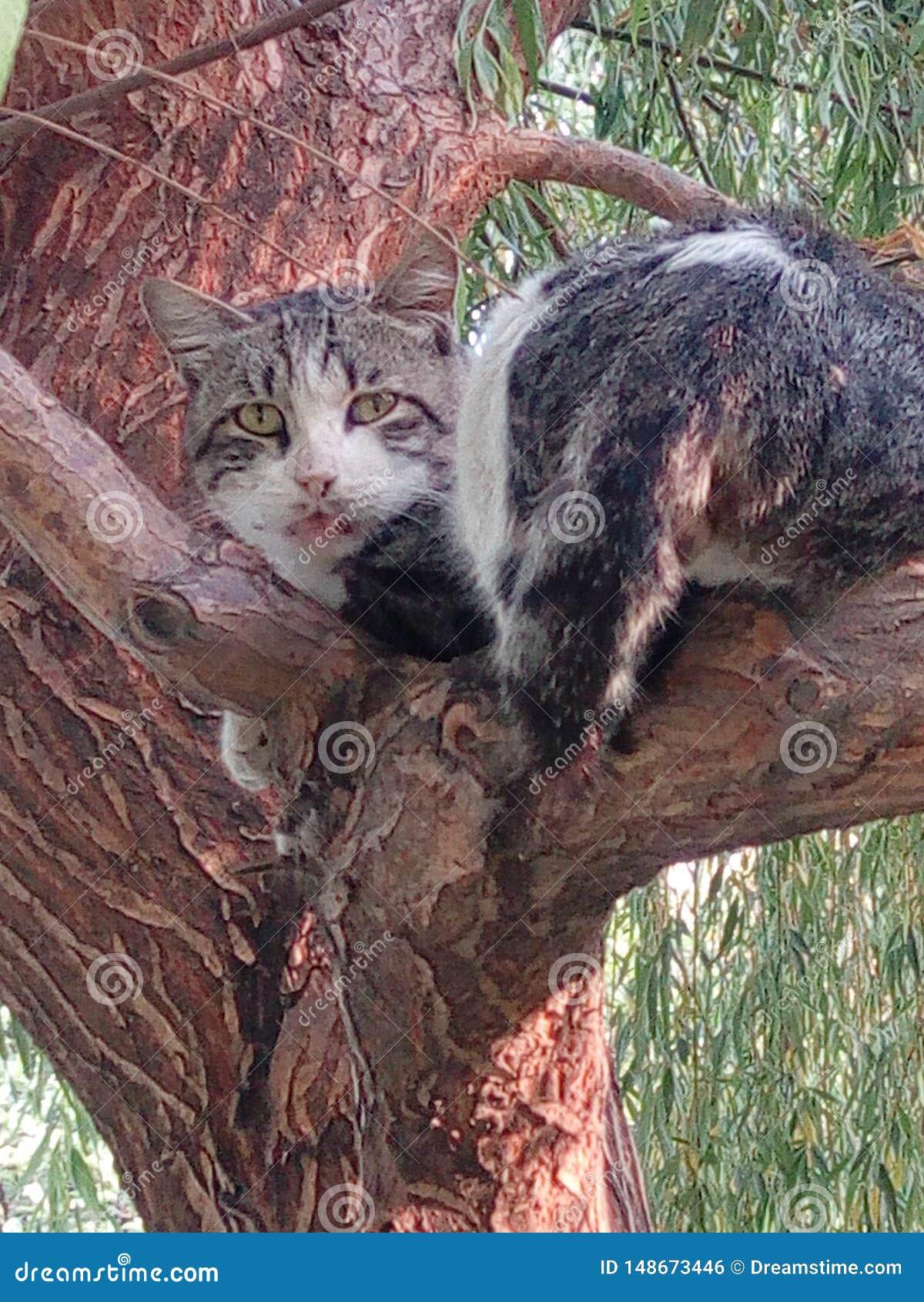 De mooie katten van de boom zijn verbaasd